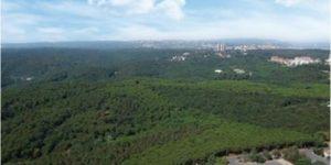 Uyan İstanbul Ormanlar yağmalanıyor!
