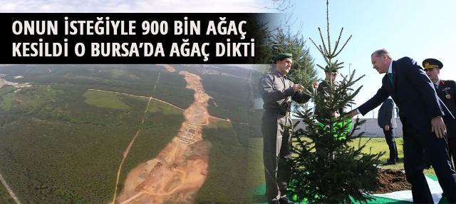 İsteğiyle 900 bin ağaç kesildi, Tayyip Erdoğan ağaç dikti