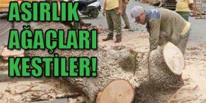 Emirgan'da ağaç katliamı!