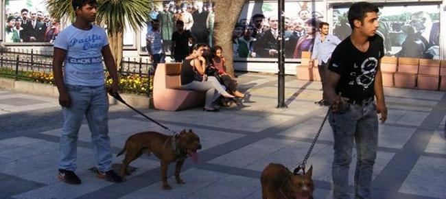 Sokak müzisyenlerine pitbull'u saldırı