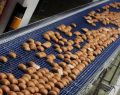 Halk ekmek yüzde 100 katkılı çıktı