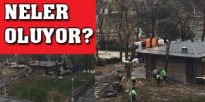 Gezi Parkı'nda ağaçları kesiyorlar