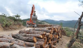 Partiler ormanlara kaynak muamelesi yapıyor