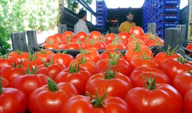 Rusya 3 ton domatesi imha etti