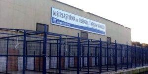Barınakta işkence iddiası'na büyük tepki