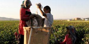 Yüz binlerce çocuk işçi okul yerine işe gidecek