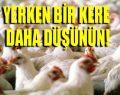 Yıllardır yamyam tavuk yiyoruz!