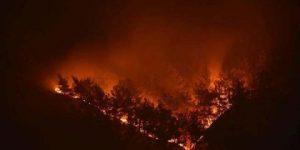 600 ceviz ağacı kül oldu!