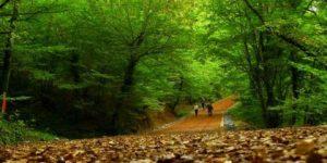 Belgrad Ormanı'nda ağaçlara kırmızı işaret