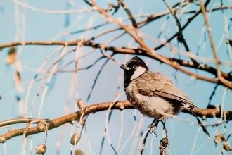 Savaş kuşları da yerinden etti