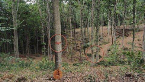 Belgrad Ormanı'nda ağaç kıyımı iddiası