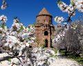 Tarihi Akdamar Adası çiçeklerle süslendi