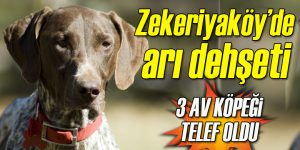 Zekeriyaköy'de bal arıları 3 av köpeğini telef etti