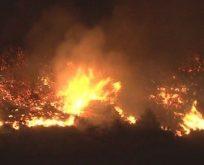 İzmir Bayraklı'da orman yangını: 3 hektar kül oldu
