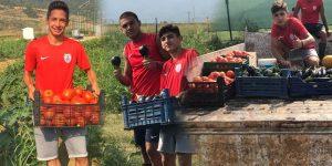 Altınordu'da önce sebze toplanıyor, sonra futbol oynanıyor!