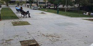 Gezi Parkı'nda ağaç katliamı
