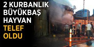 Kurbanlıkların bulunduğu barınakta yangın.