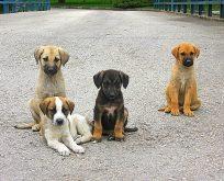 Sokak Köpekleri Sahipsiz Kaldı!