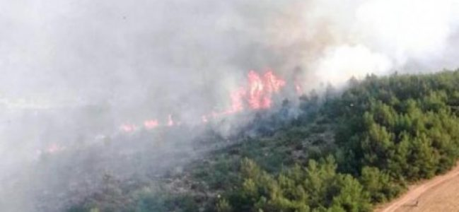 Turizm cennetinde yangın dehşeti