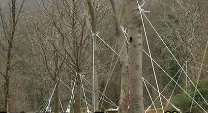 İBB'nin söktüğü o ağaçlar kurudu!