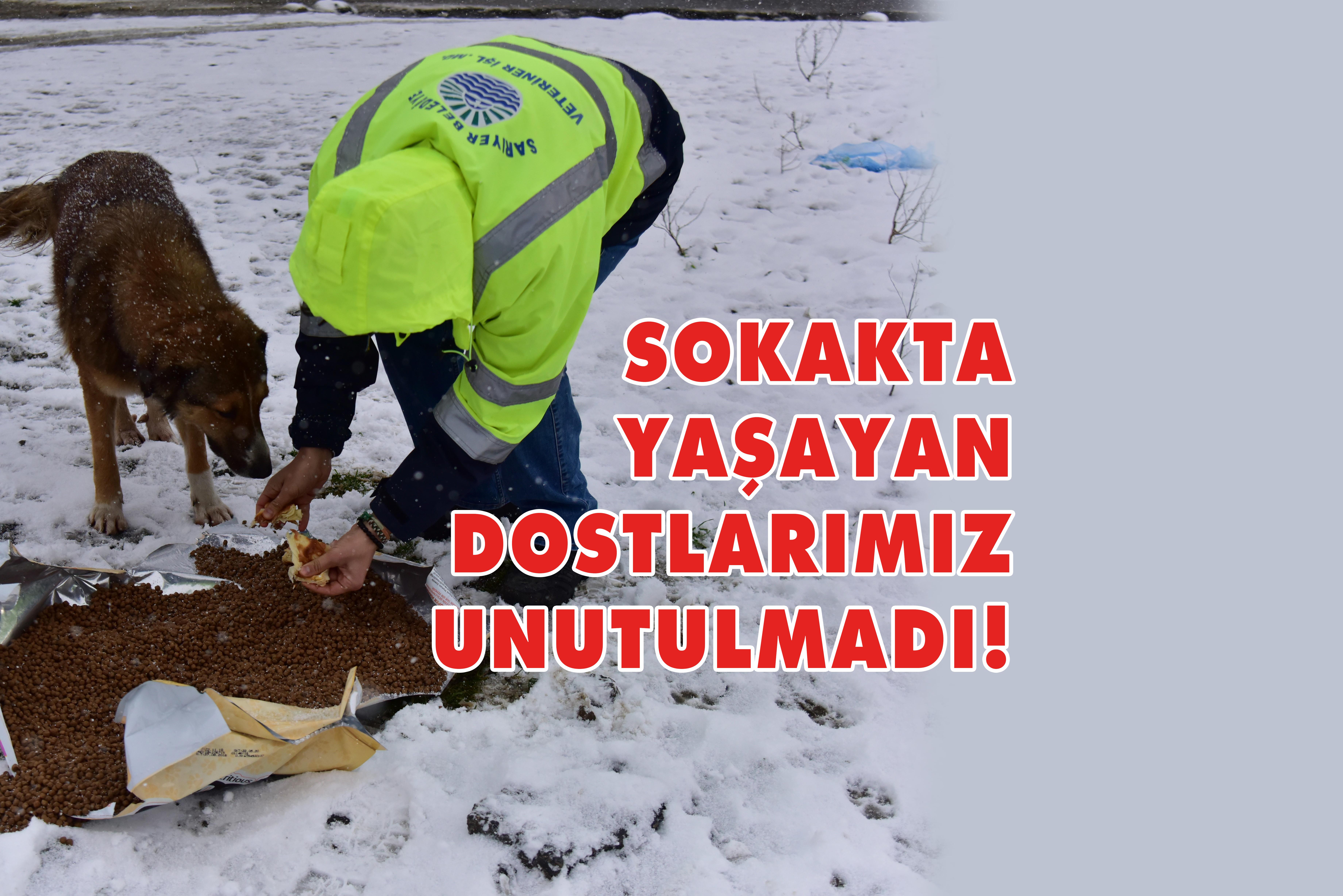 SOĞUKTA SAHİPSİZ HAYVANLAR UNUTULMADI!