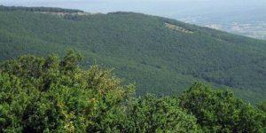 Istranca Ormanları'nın kalbine dinamit