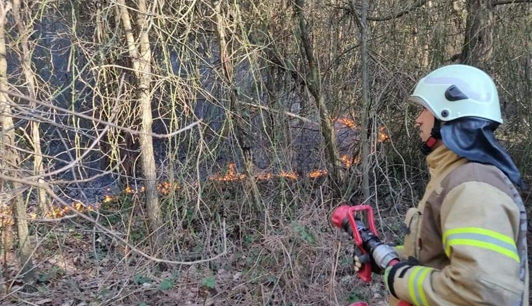 Belgrad ormanında korkutan yangın!