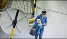 Sarıyer Maslak'ta köpek hırsızlığı.